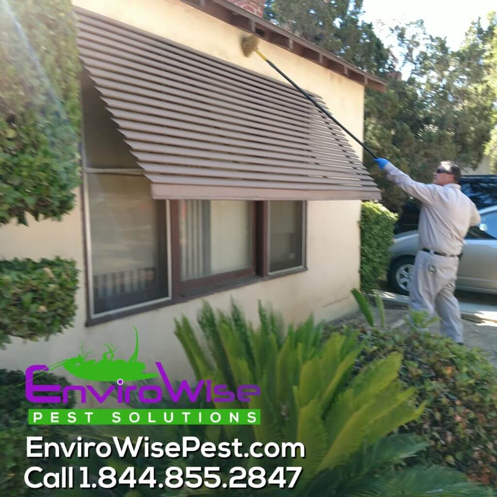 EnviroWise Pest Solutions Inspection and Removing Webs