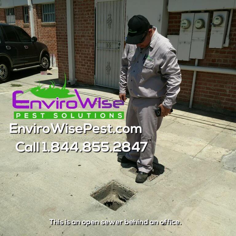 EnviroWise Pest Solutions Inspection 1